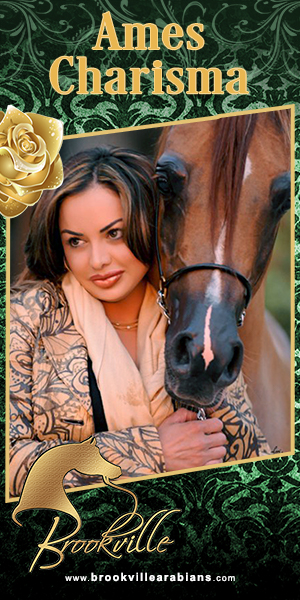 2017oct brookville arabians large web banner 300x600 Annabella and Ames Charisma
