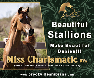 2017oct brookville arabians small web banner 300x250 Miss Charismatic BVA
